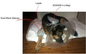 SCENAR_dogs1